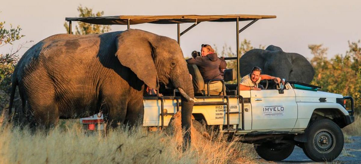Close elephant encounters with Imvelo Safaris