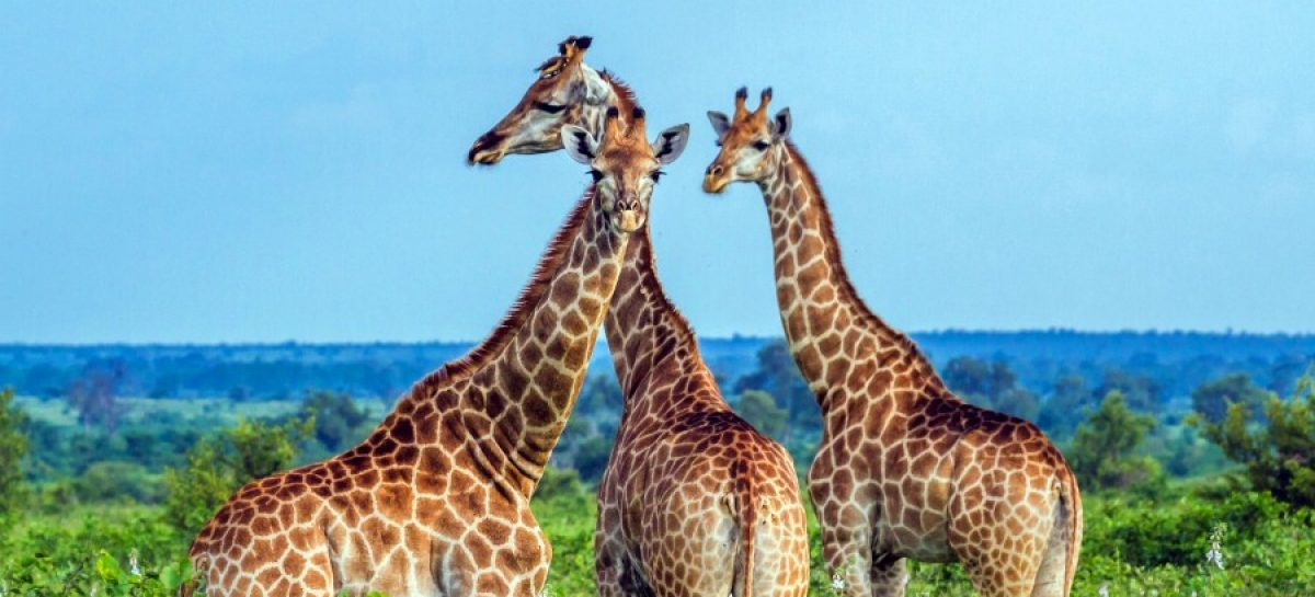 $108M boost for African Parks